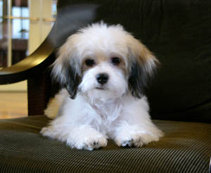 Pocket Puppies Boutique Chicago - Photo Gallery