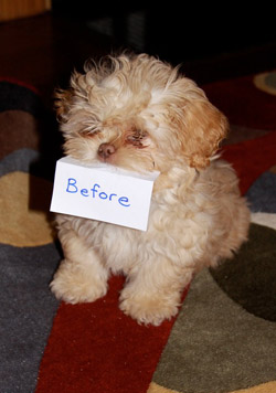 Pocket Puppies Boutique Chicago Grooming Packages